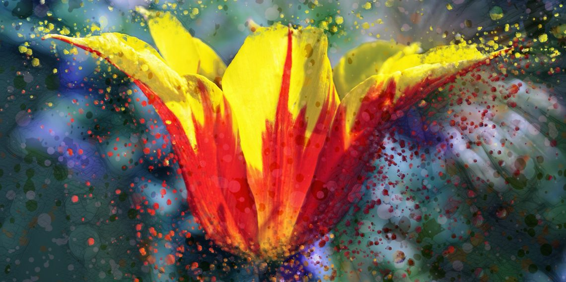 Portrait-Tulip-Color-Burst