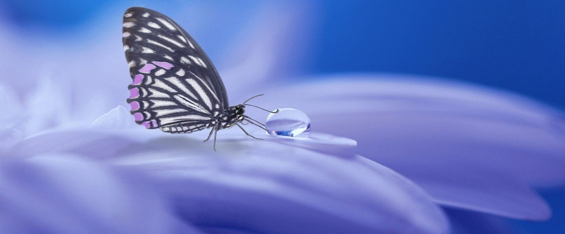 butterfly-flower-petal-droplet