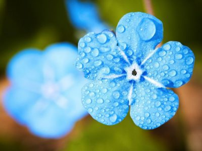 Portrait-Blue-Flower