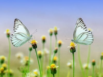 Portrait-Butterflies-Flowers